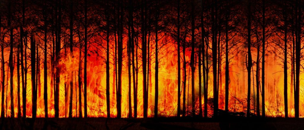 forest-fire-3836834_1920