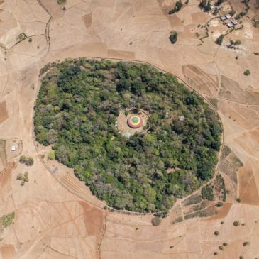 Encountering an Essential Lesson in the Church Forests of Ethiopia